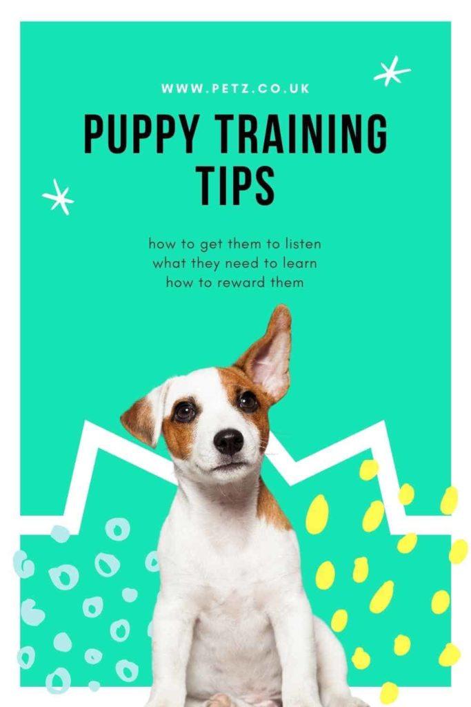 Best Puppy Training Tips