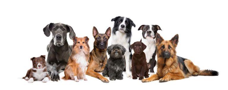 Dog Care Sheet