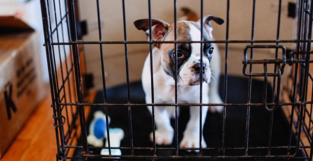 Dog Crate Training