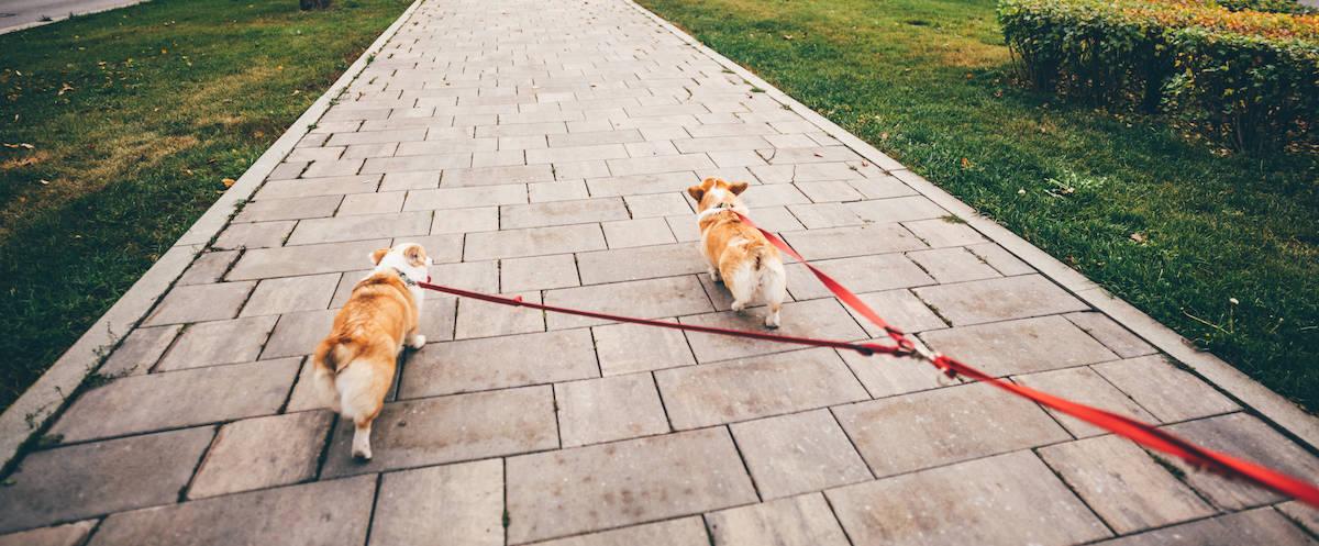 Dog Handling Tips