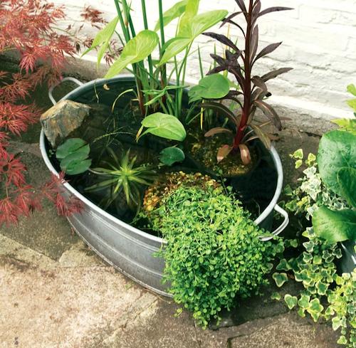 Gardener's World How To Make A Mini Pond