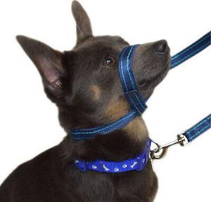 Gencon Clip To Collar Dog Training Head Collar