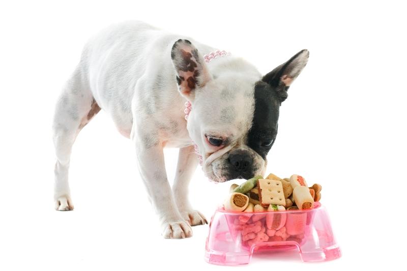 baking dog treats