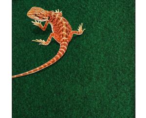 Komodo Reptile Carpet