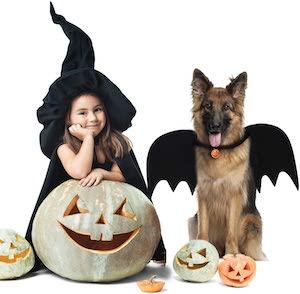 Bat Dog Costume