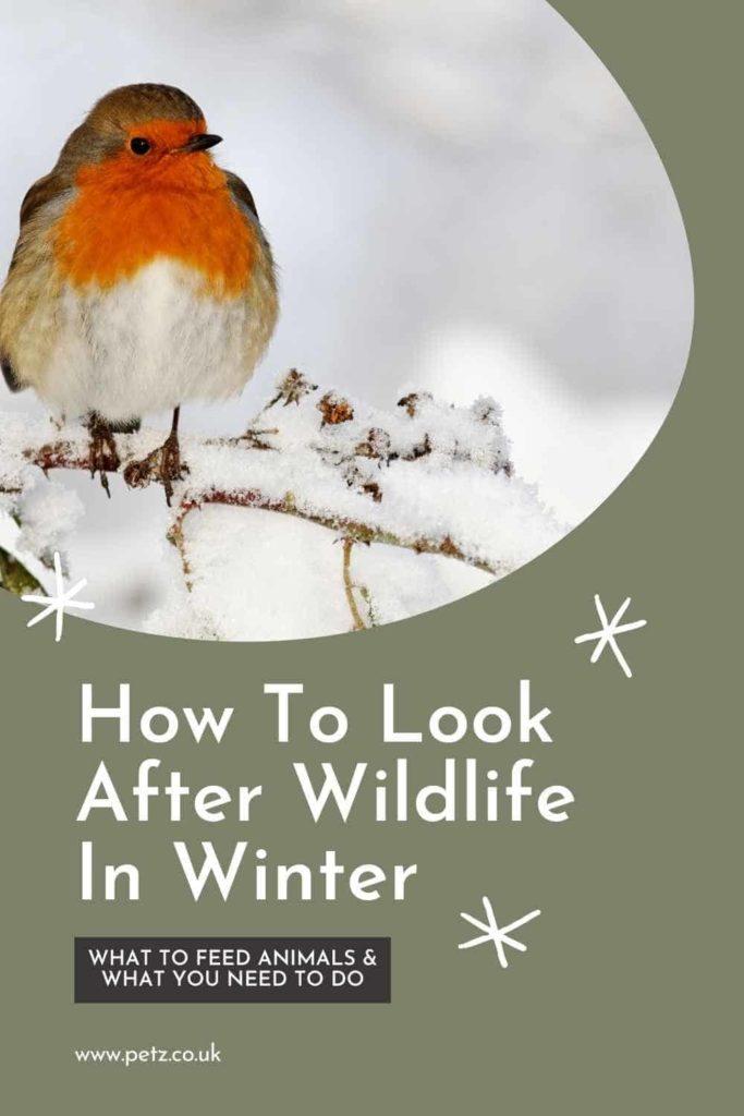 Looking After Wildlife In Winter