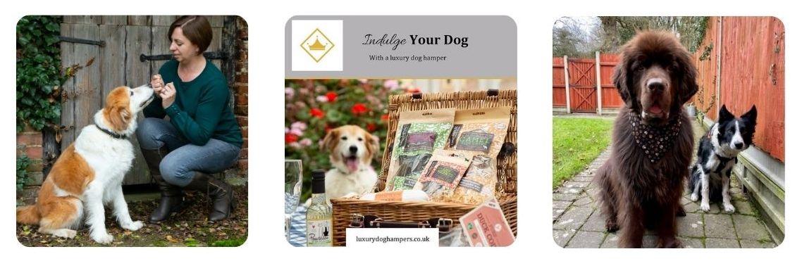 Luxury Dog Hamper