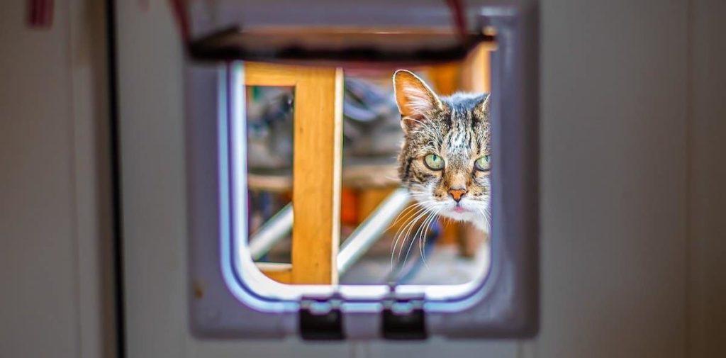 Microchip Cat Flap Pet Tech
