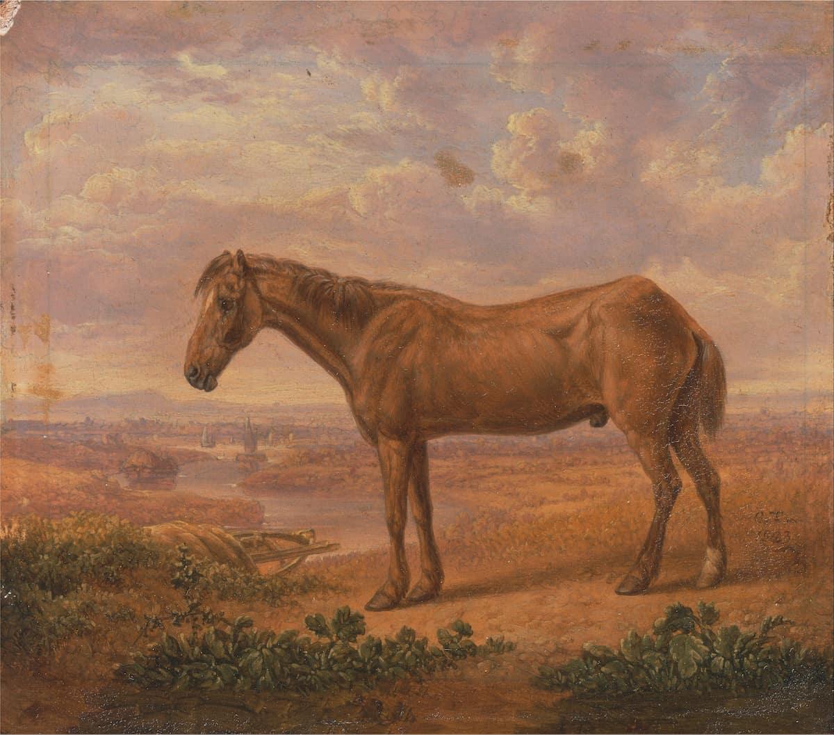 Oldest horse ever