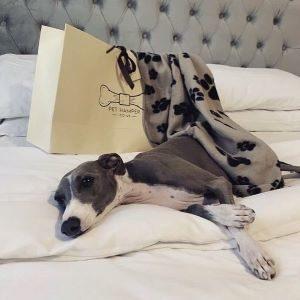 Custom,Luxury Pet Hamper