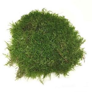 Swell Live Green Moss