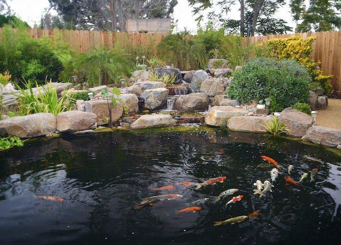 The Pond Digger Koi Pond