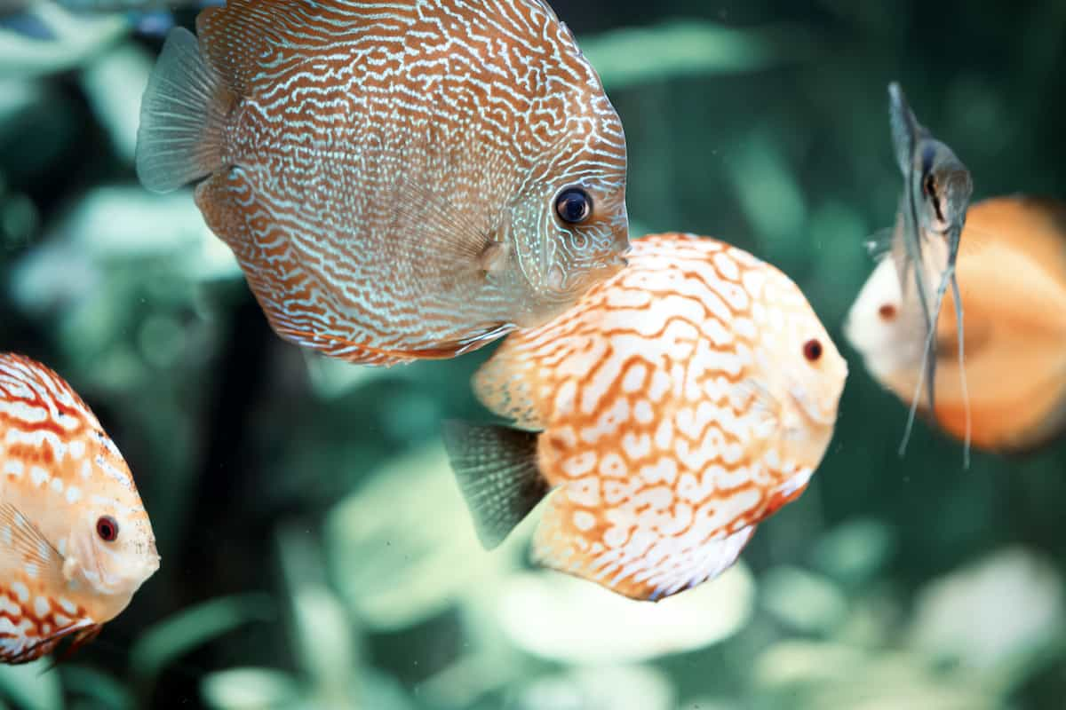 Tropical Fish Care Sheet