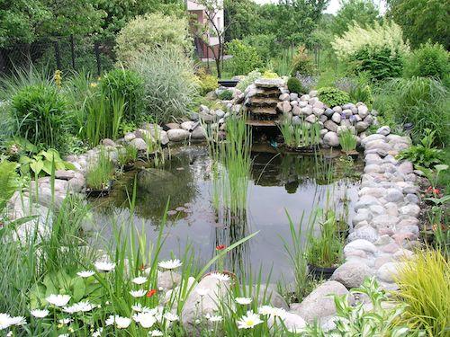 Water Garden Inspiration