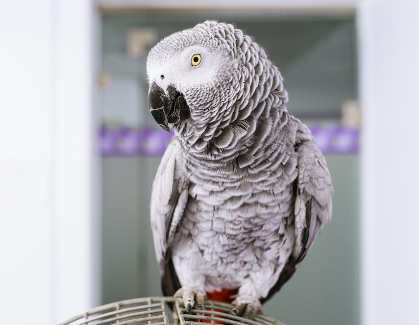 What Parrots Eat