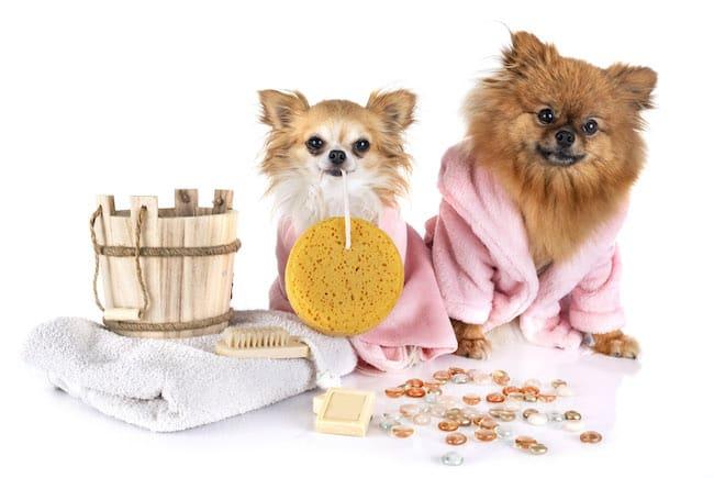 dog bathing benefits