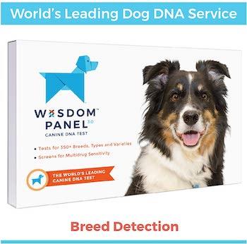 Wisdom Panel 3.0 Canine DNA Test