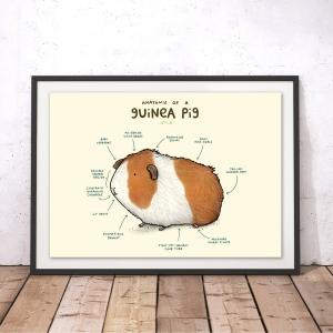 Anatomy of A Guinea Pig Print
