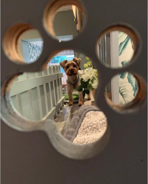 barkdales dog pampering