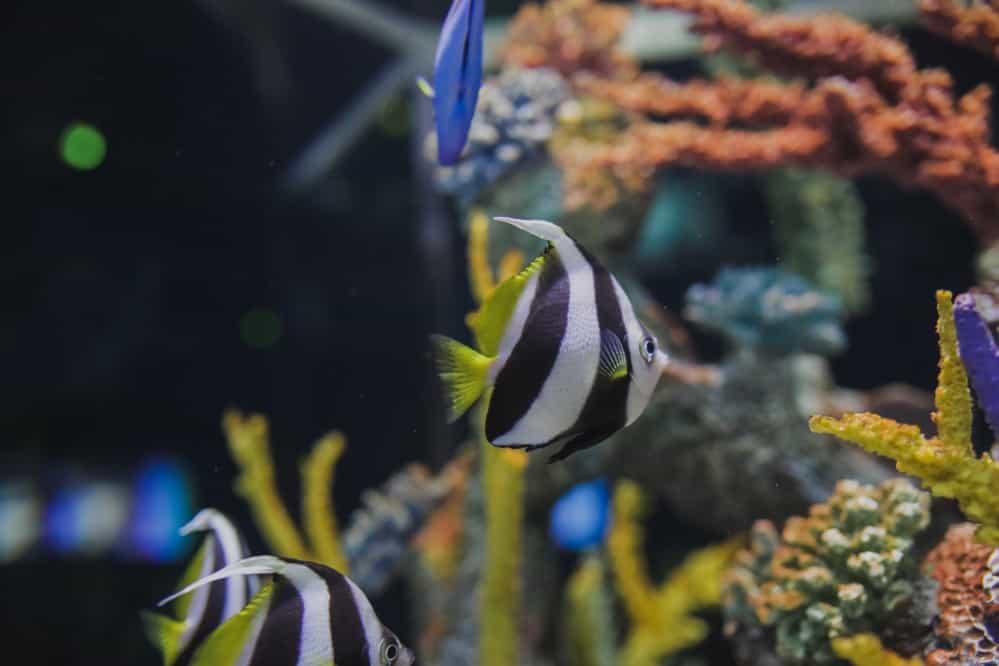Best Aquarium Heaters Reviewed For 2020 Petz