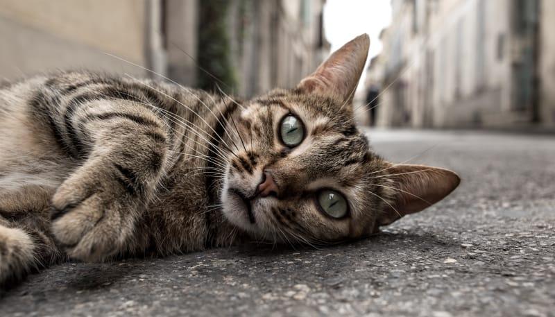 cat abandoned due to coronavirus