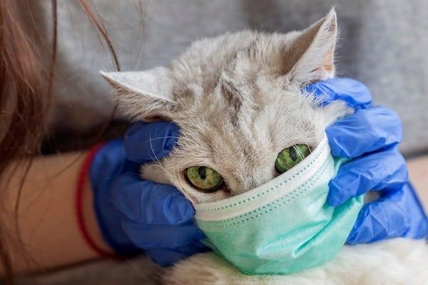 why pets dont need masks for coronavirus