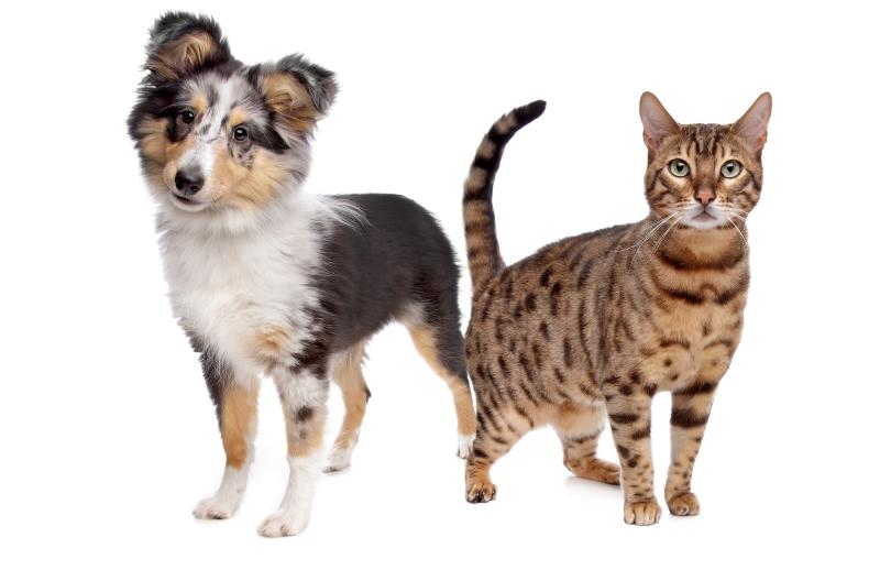 protecting pets from coronavirus