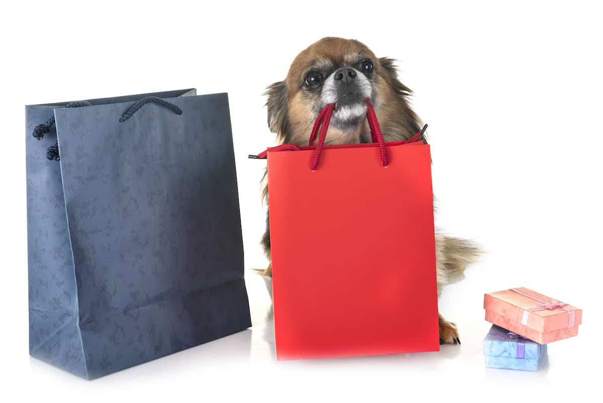 Chihuahua with shopping bags