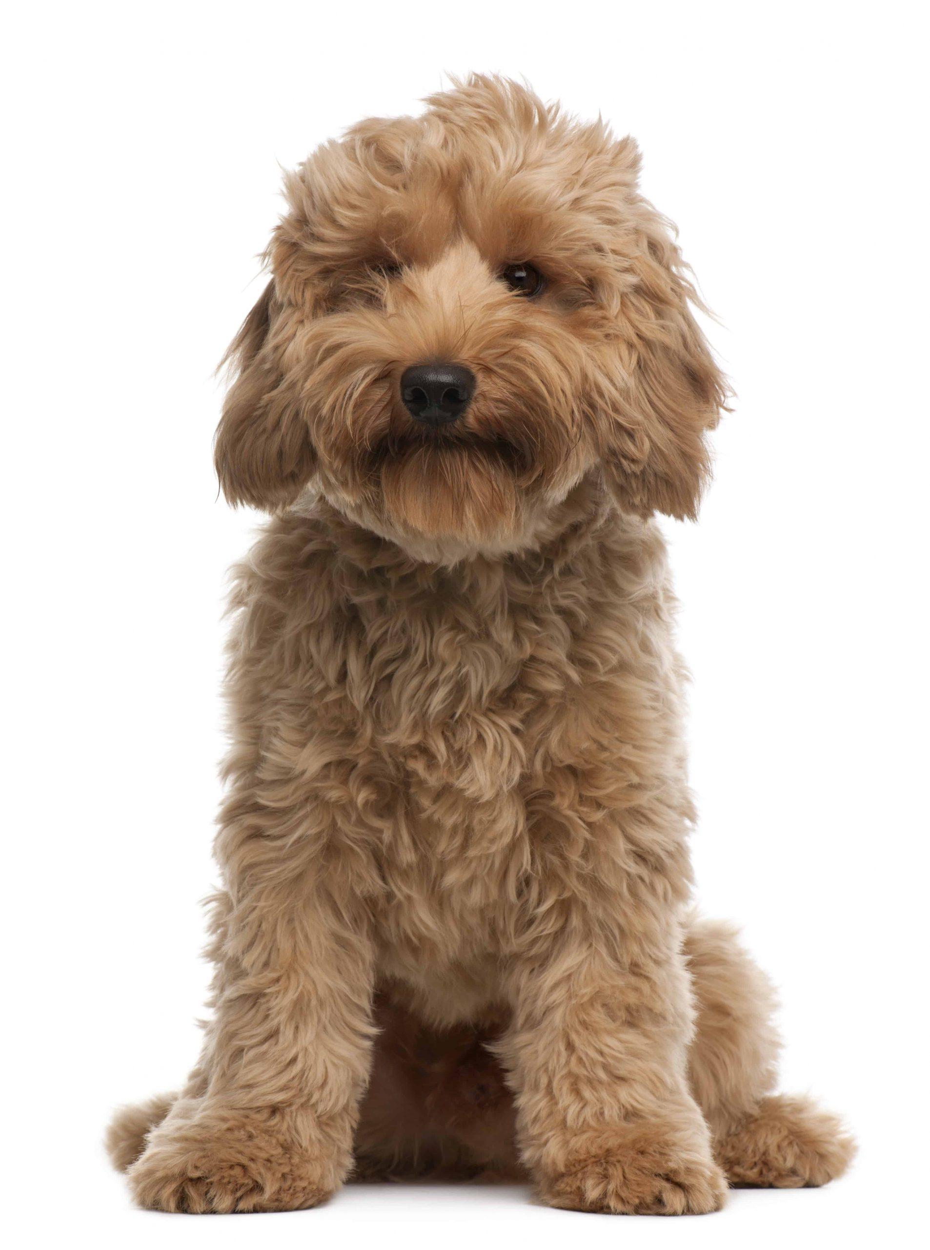 Cute cross breed dog