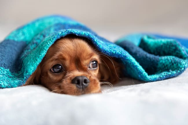 do dogs have bad dreams?