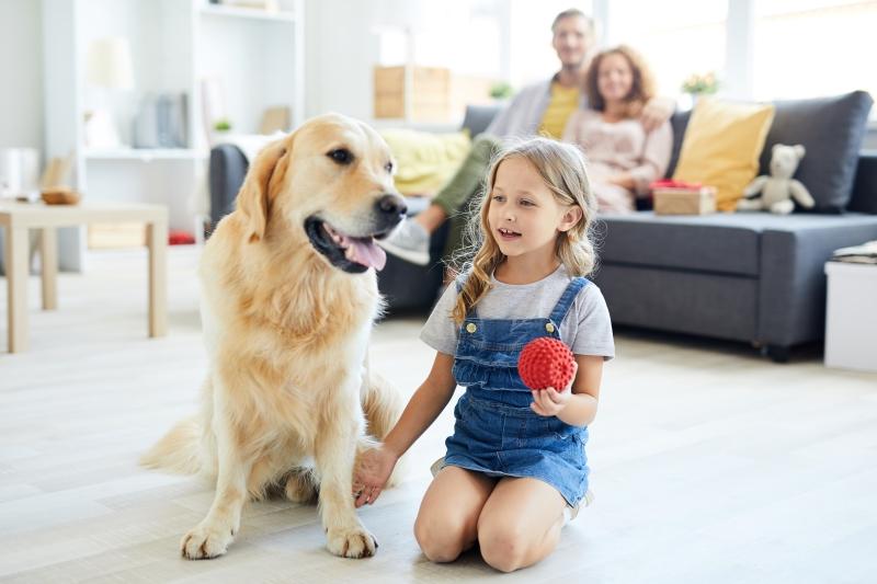 self-isolation dog games