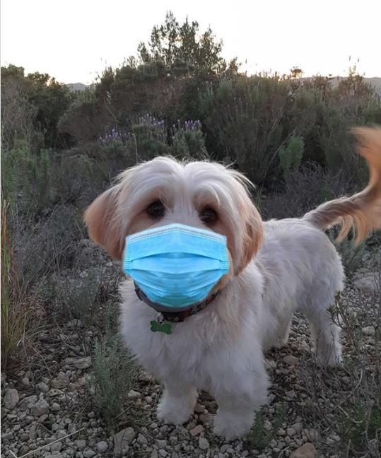 can my dog wear a mask?