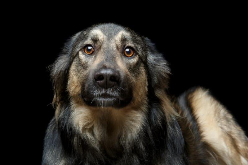 coronavirus impact on dog shelter donation