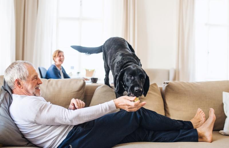 dog plays indoors during coronavirus lockdown