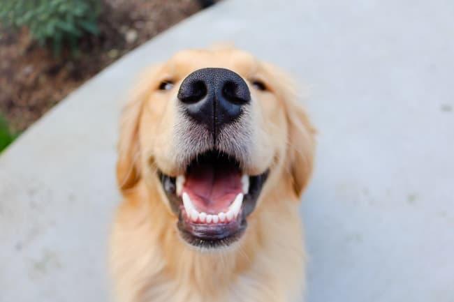 dog teeth whitening tips