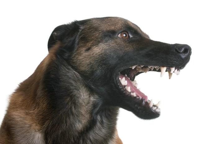 dog fangs