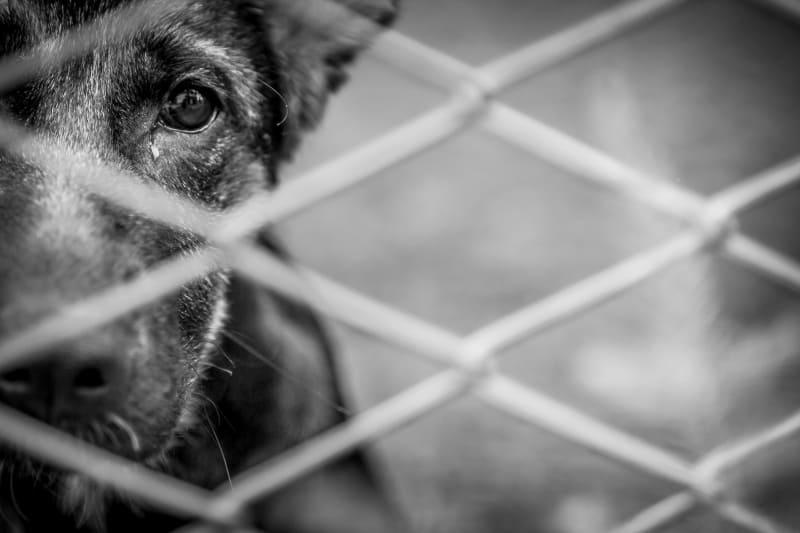 overcrowded dog shelters