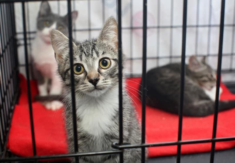 kittens in animal shelter