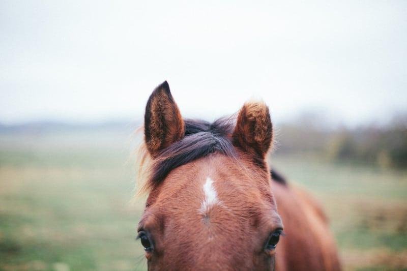 horse microchip information