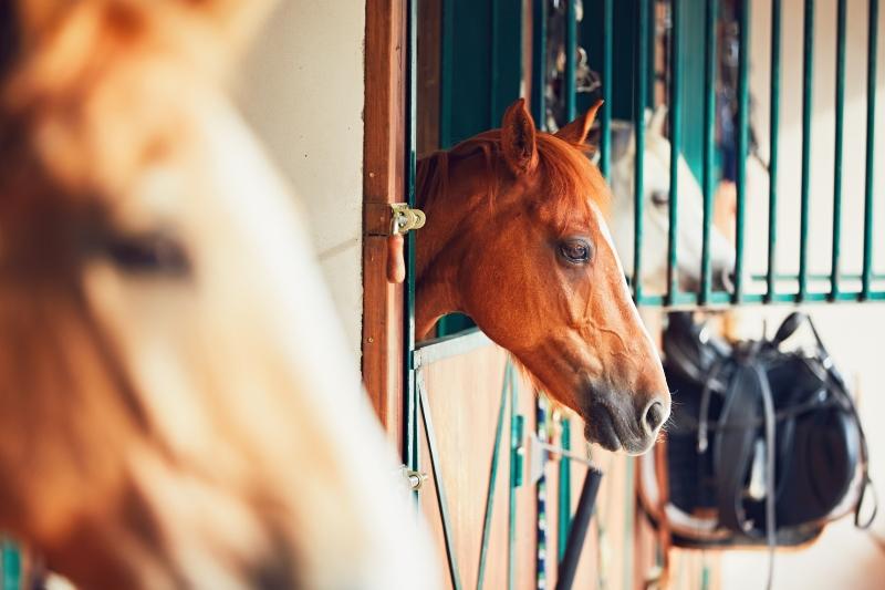 equine vaccinations coronavirus