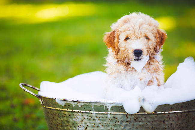 dog washing frequency