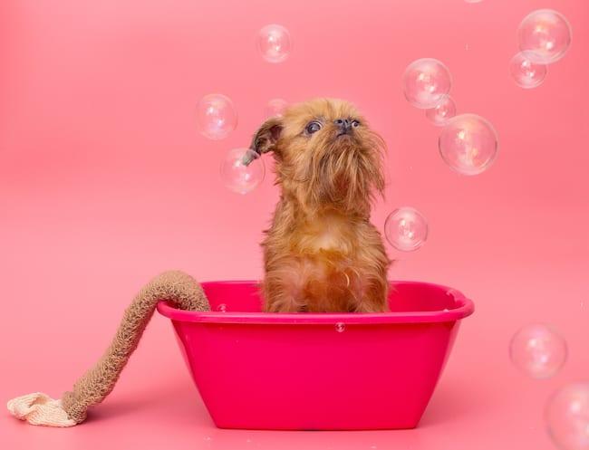 puppy bathing tips