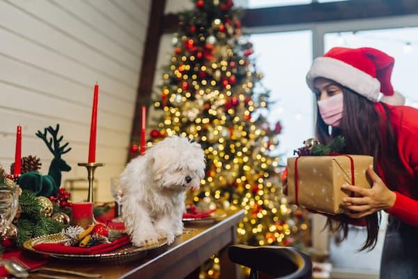 keep pets stress free at christmas