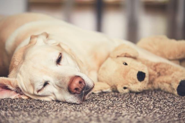 do dogs really dream?