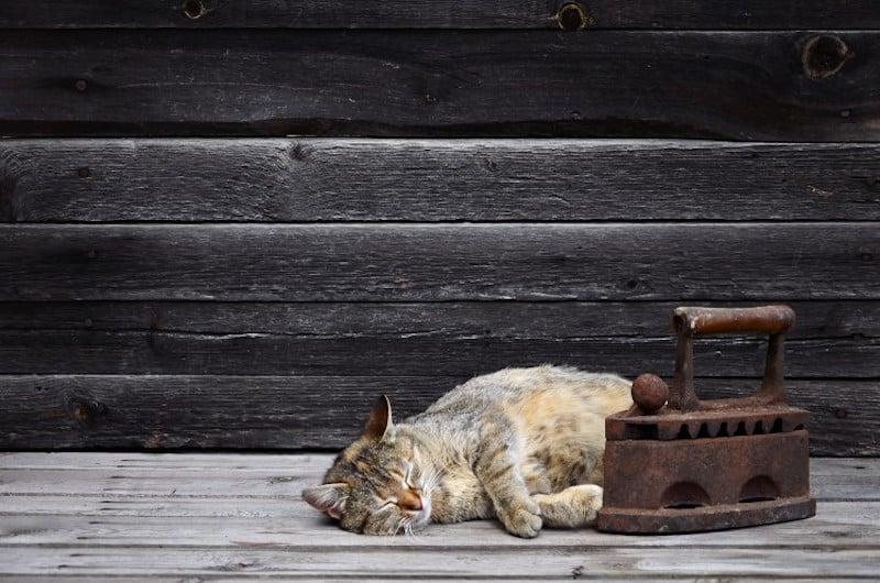 cat on cbd