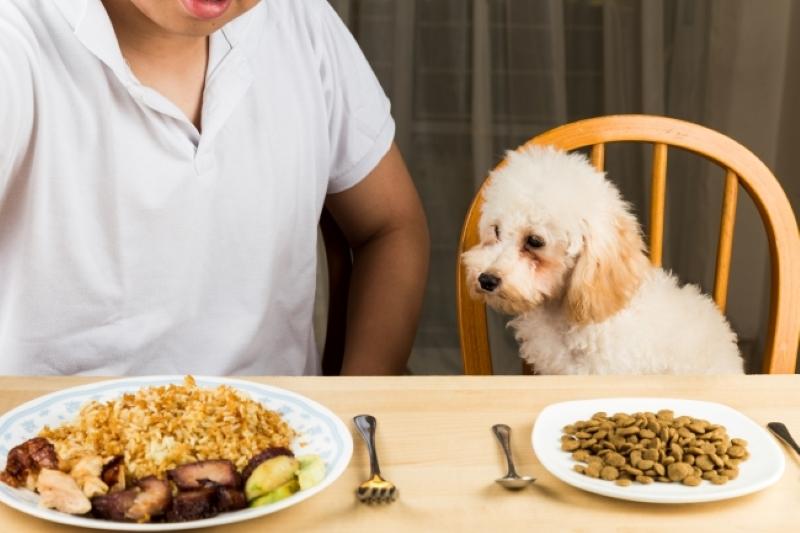 grain free vs normal dog food