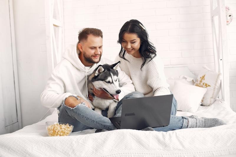 do dogs watch TV?
