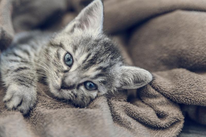 spaying kittens for lockdown
