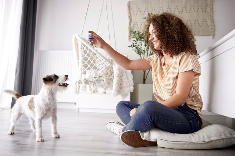 simple teicks to teach your dog