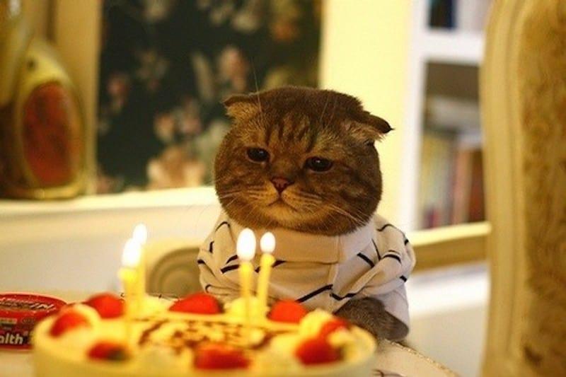 creme puff the oldest cat